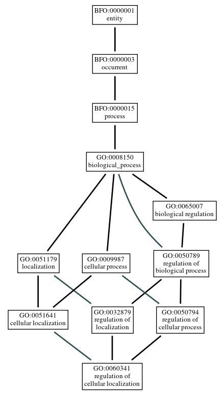 Graph of GO:0060341