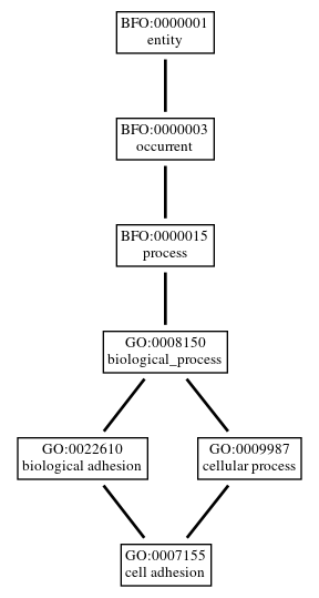 Graph of GO:0007155