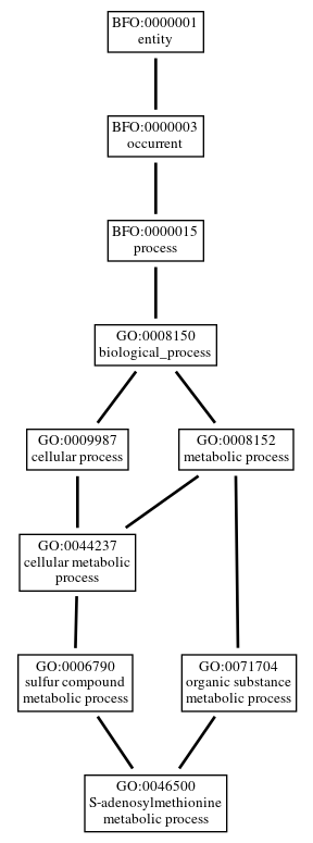 Graph of GO:0046500
