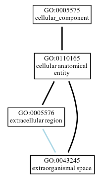 Graph of GO:0043245