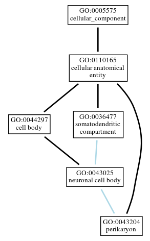 Graph of GO:0043204