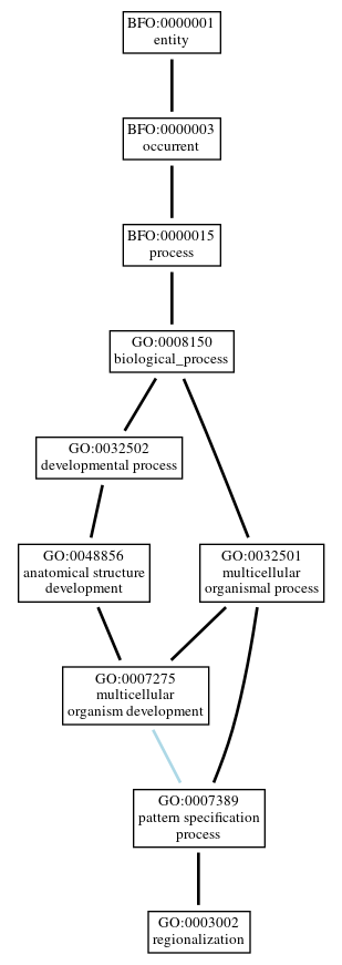 Graph of GO:0003002