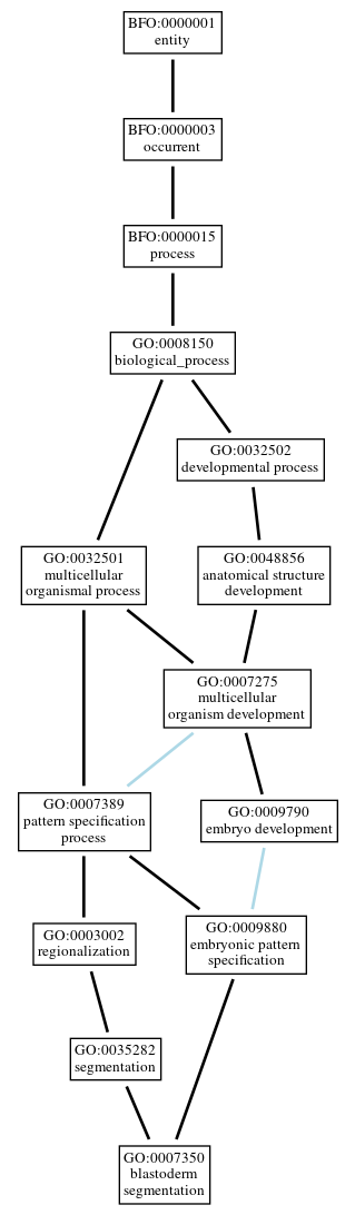 Graph of GO:0007350