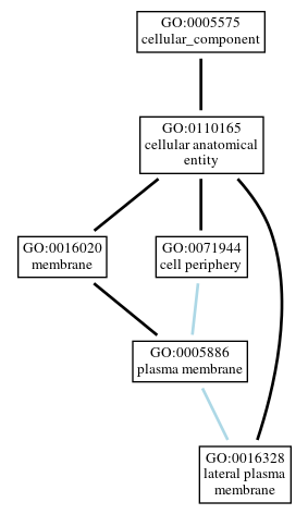 Graph of GO:0016328
