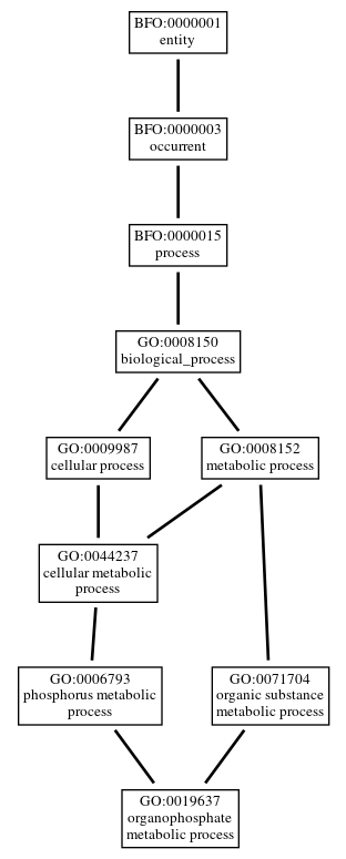 Graph of GO:0019637