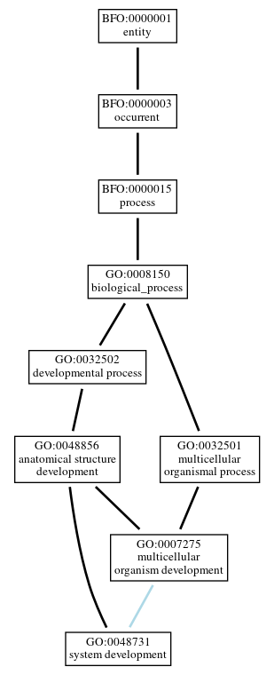 Graph of GO:0048731