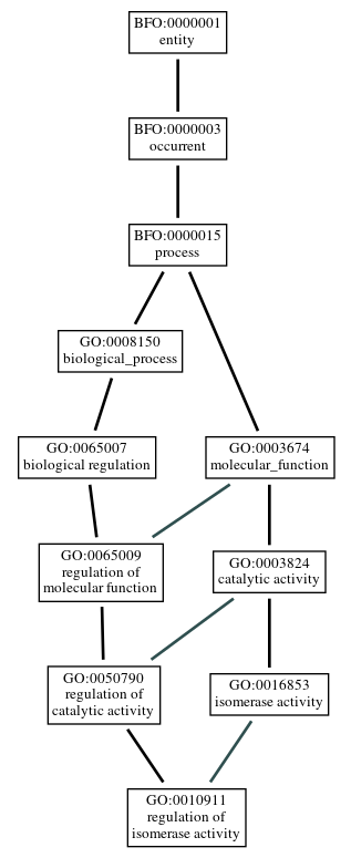 Graph of GO:0010911
