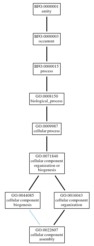 Graph of GO:0022607