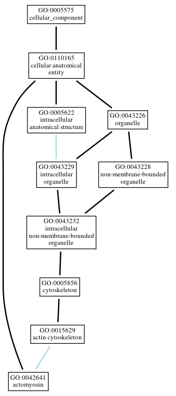 Graph of GO:0042641