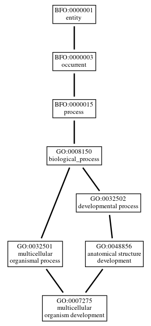 Graph of GO:0007275