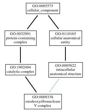 Graph of GO:0009338