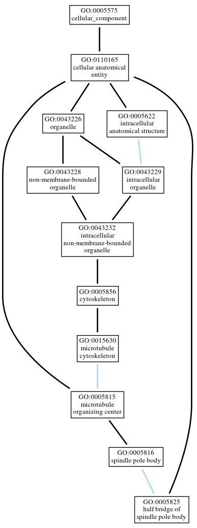 Graph of GO:0005825