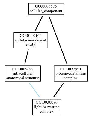 Graph of GO:0030076