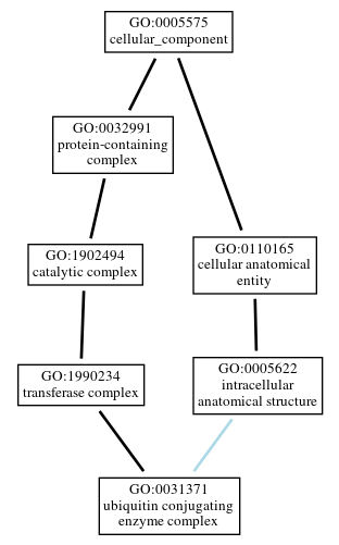 Graph of GO:0031371