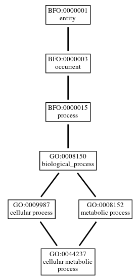 Graph of GO:0044237