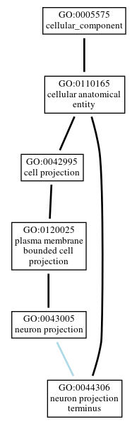 Graph of GO:0044306