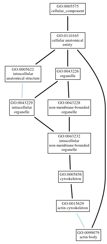 Graph of GO:0099079