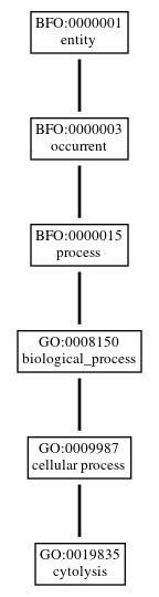 Graph of GO:0019835