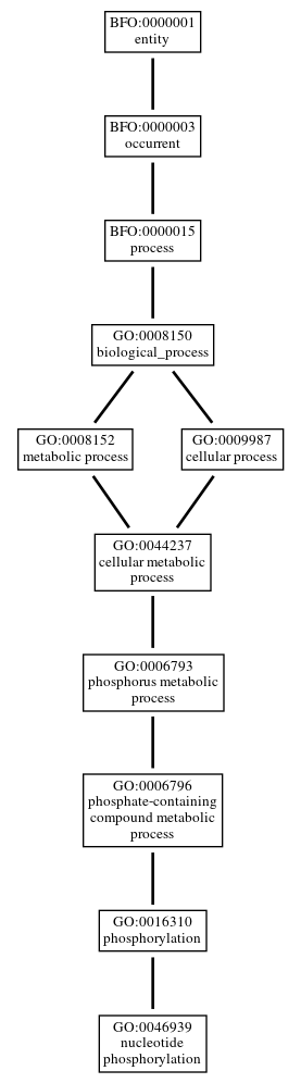 Graph of GO:0046939