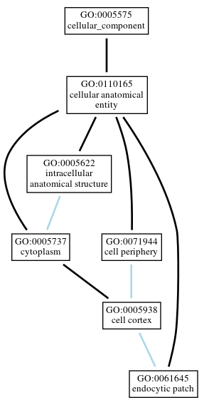 Graph of GO:0061645