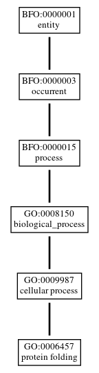 Graph of GO:0006457