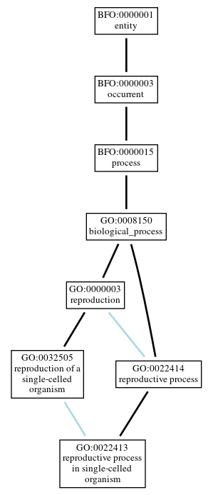 Graph of GO:0022413