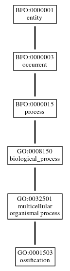 Graph of GO:0001503