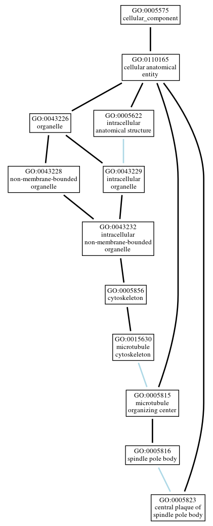 Graph of GO:0005823