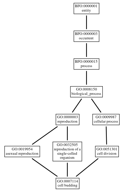 Graph of GO:0007114