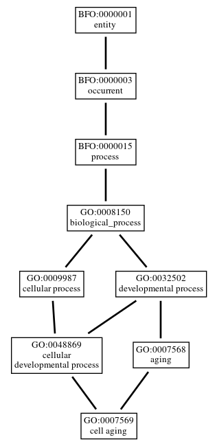 Graph of GO:0007569