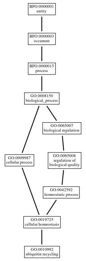 Graph of GO:0010992