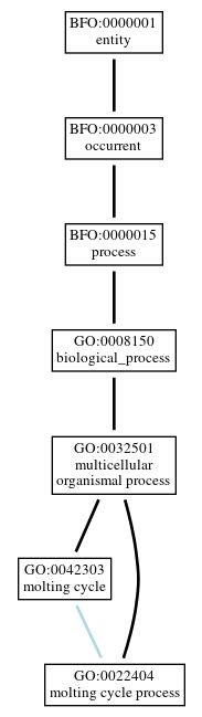 Graph of GO:0022404