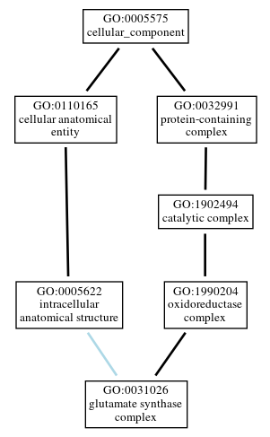 Graph of GO:0031026
