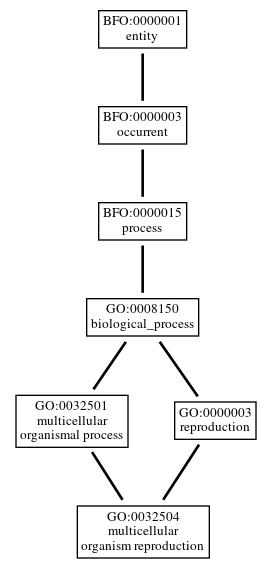 Graph of GO:0032504
