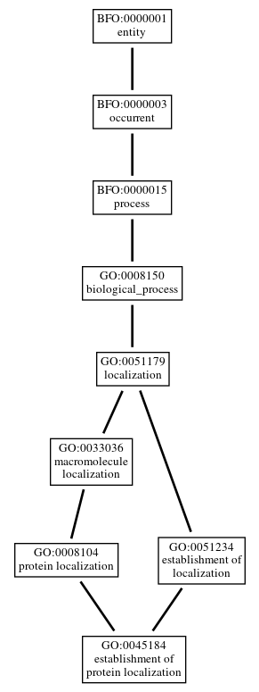 Graph of GO:0045184