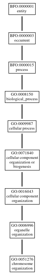 Graph of GO:0051276
