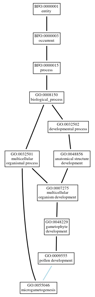 Graph of GO:0055046