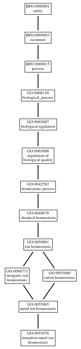 Graph of GO:0055076