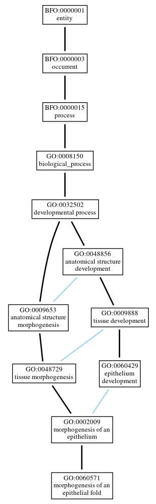 Graph of GO:0060571