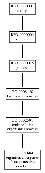 Graph of GO:0071684