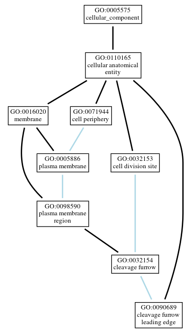 Graph of GO:0090689