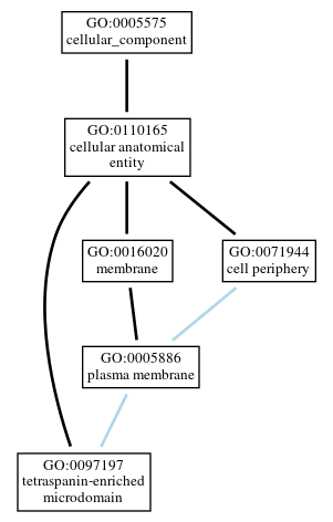 Graph of GO:0097197