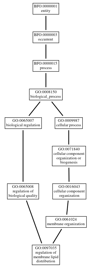 Graph of GO:0097035