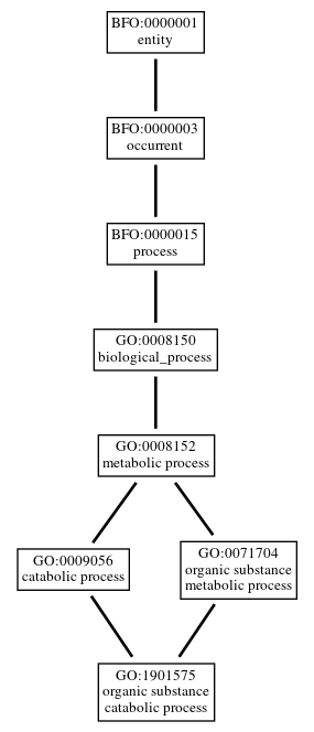 Graph of GO:1901575