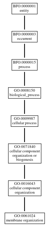 Graph of GO:0061024