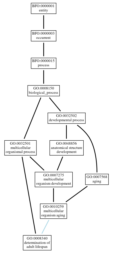 Graph of GO:0008340