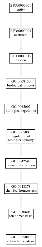 Graph of GO:0055080