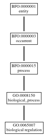 Graph of GO:0065007