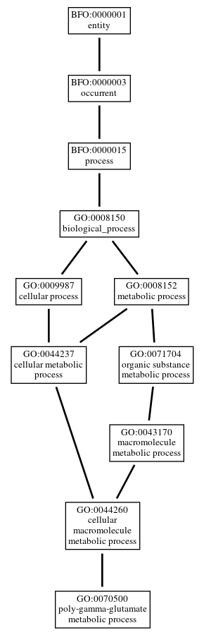 Graph of GO:0070500