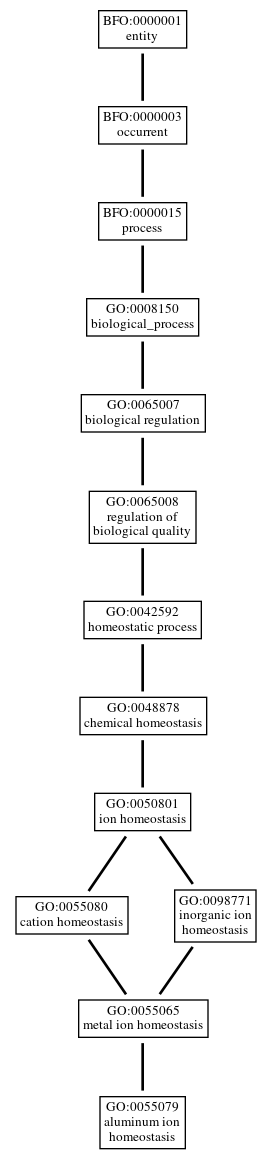 Graph of GO:0055079